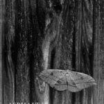 cover image - Asphalt VII