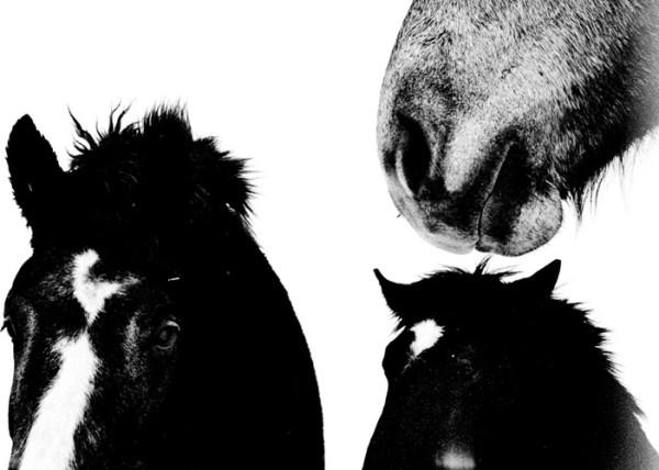 Hajime KIMURA | inbetween art gallery